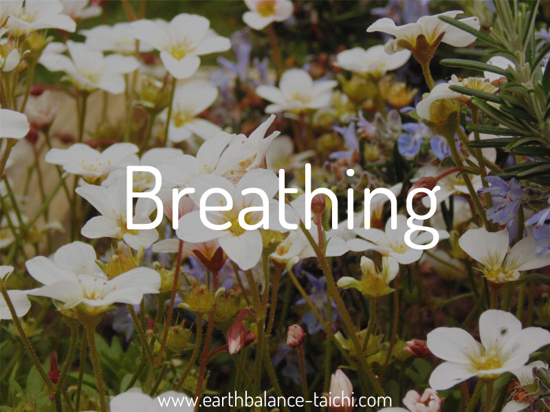 The Power of Breathing | Earth Balance Tai Chi